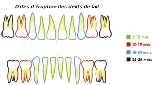 Date d'éruption des dents de lait